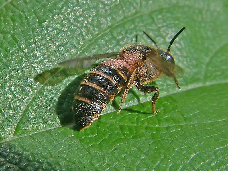 bijen houden in tuin